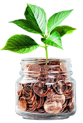 Coin Jar Plant Growing Out